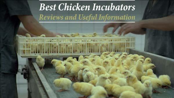 best egg incubator