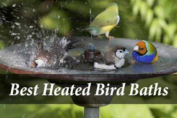 Best Heated Bird Bath
