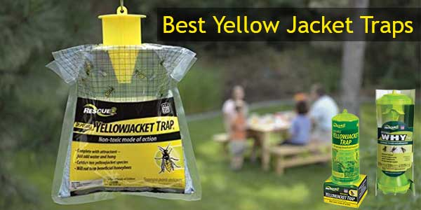 Best Yellow Jacket Trap